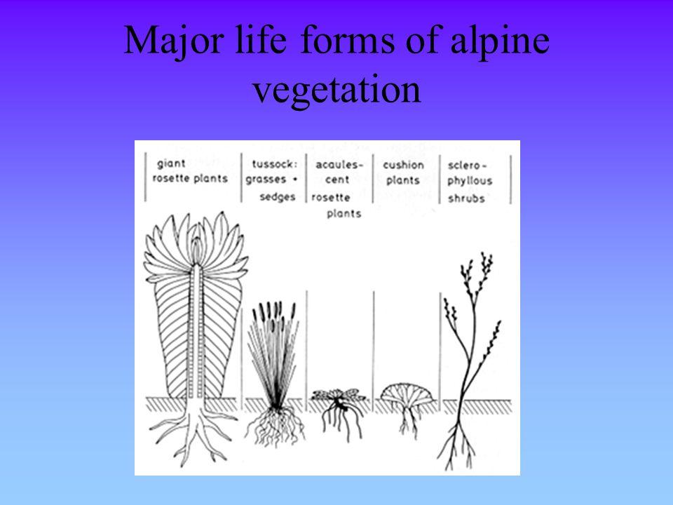 Major life forms of alpine vegetation