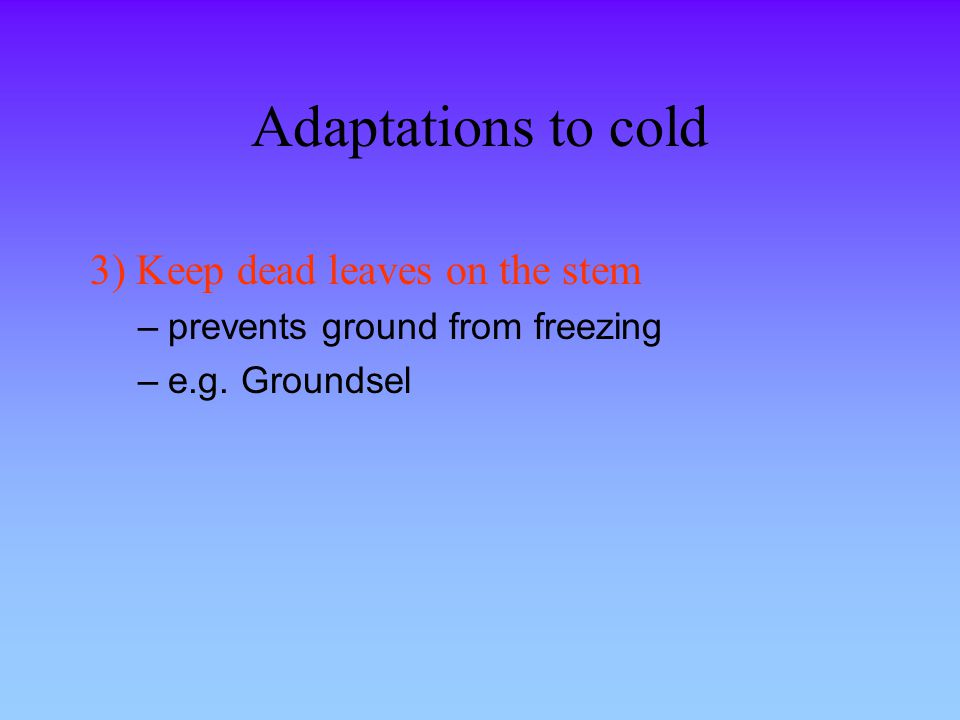Adaptations to cold 3) Keep dead leaves on the stem