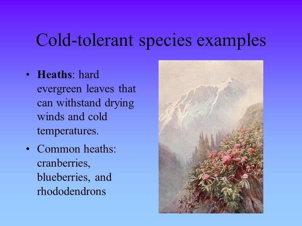 Cold-tolerant species examples