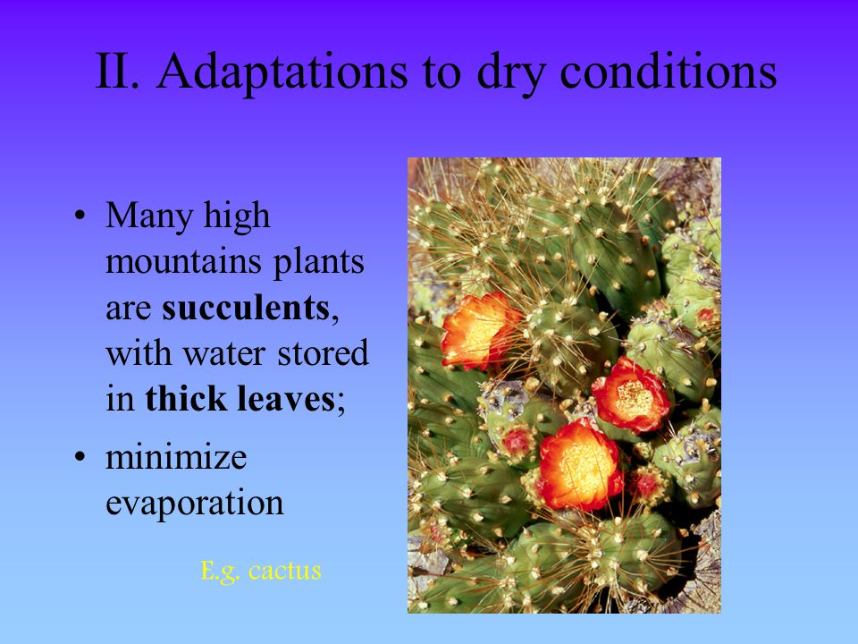 II. Adaptations to dry conditions