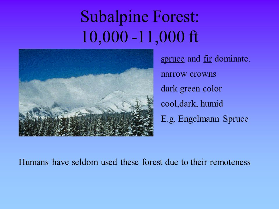 Subalpine Forest: 10,000 -11,000 ft spruce and fir dominate.