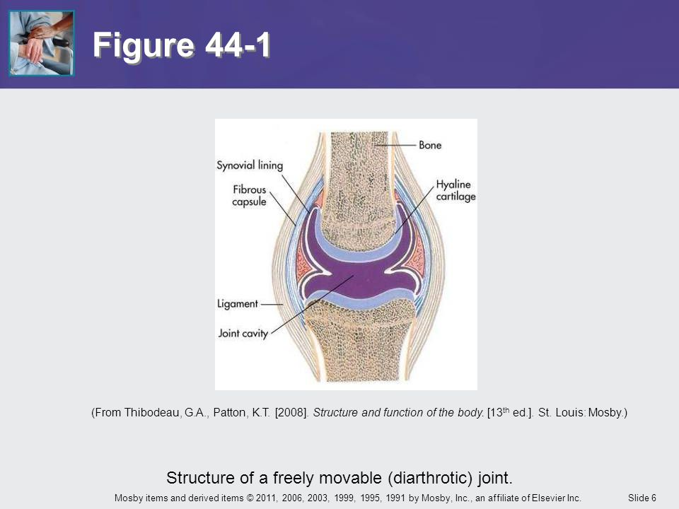 Structure of a freely movable (diarthrotic) joint.