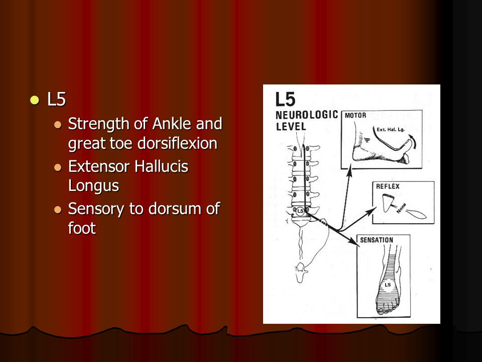 L5 Strength of Ankle and great toe dorsiflexion