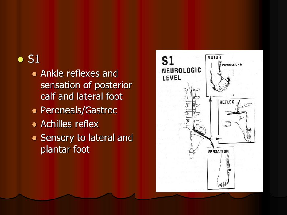 S1 Ankle reflexes and sensation of posterior calf and lateral foot