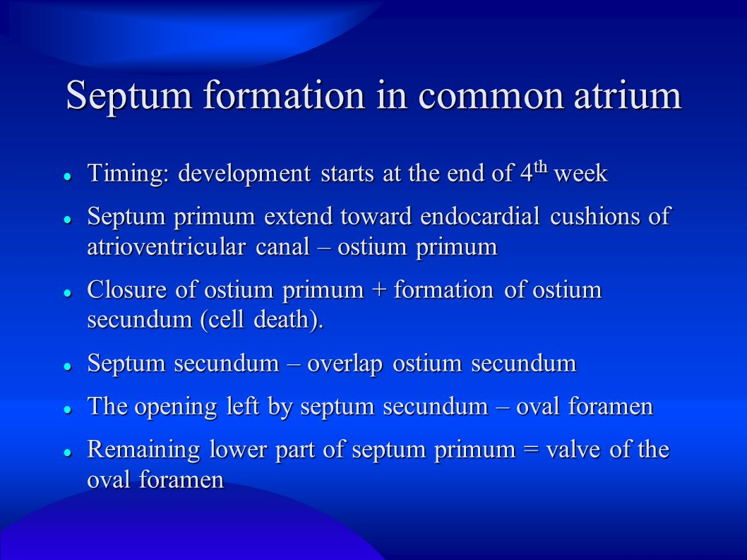 Septum formation in common atrium