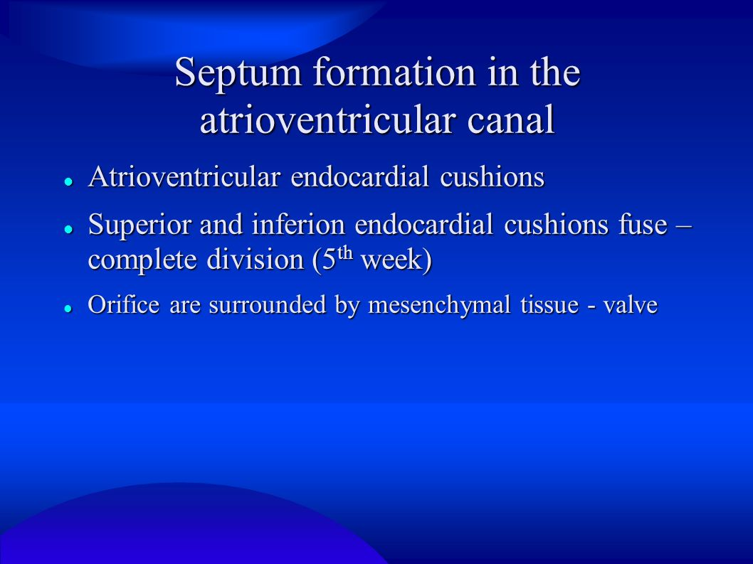 Septum formation in the atrioventricular canal