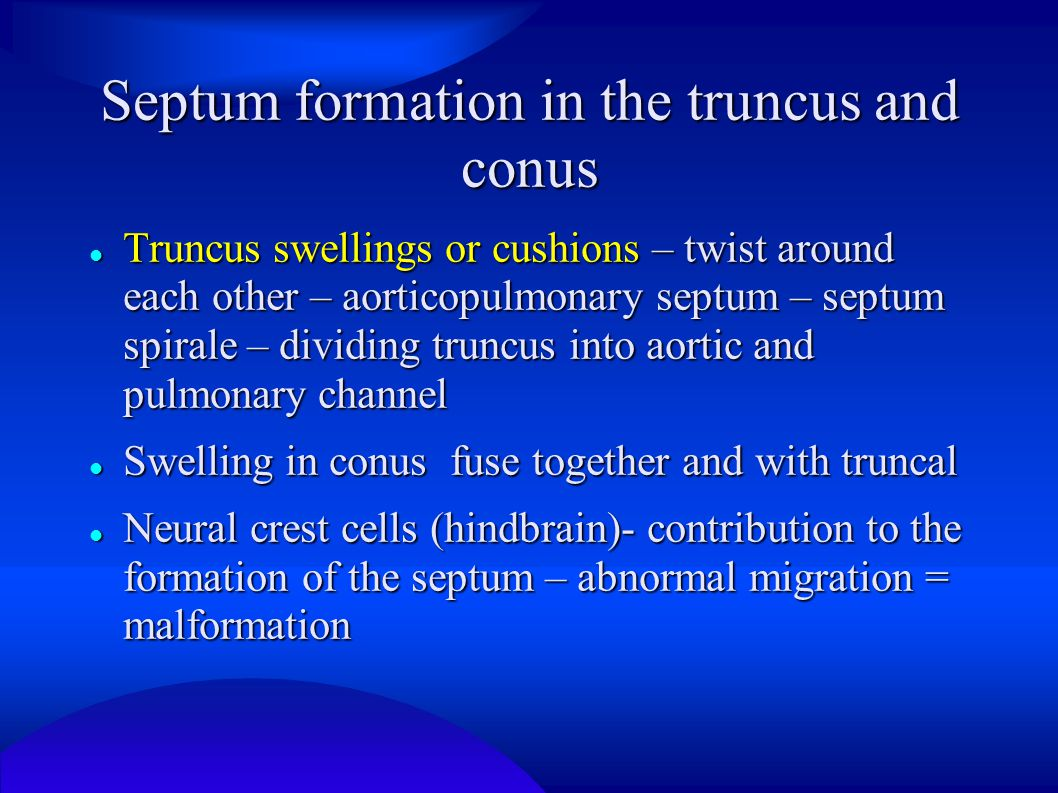 Septum formation in the truncus and conus
