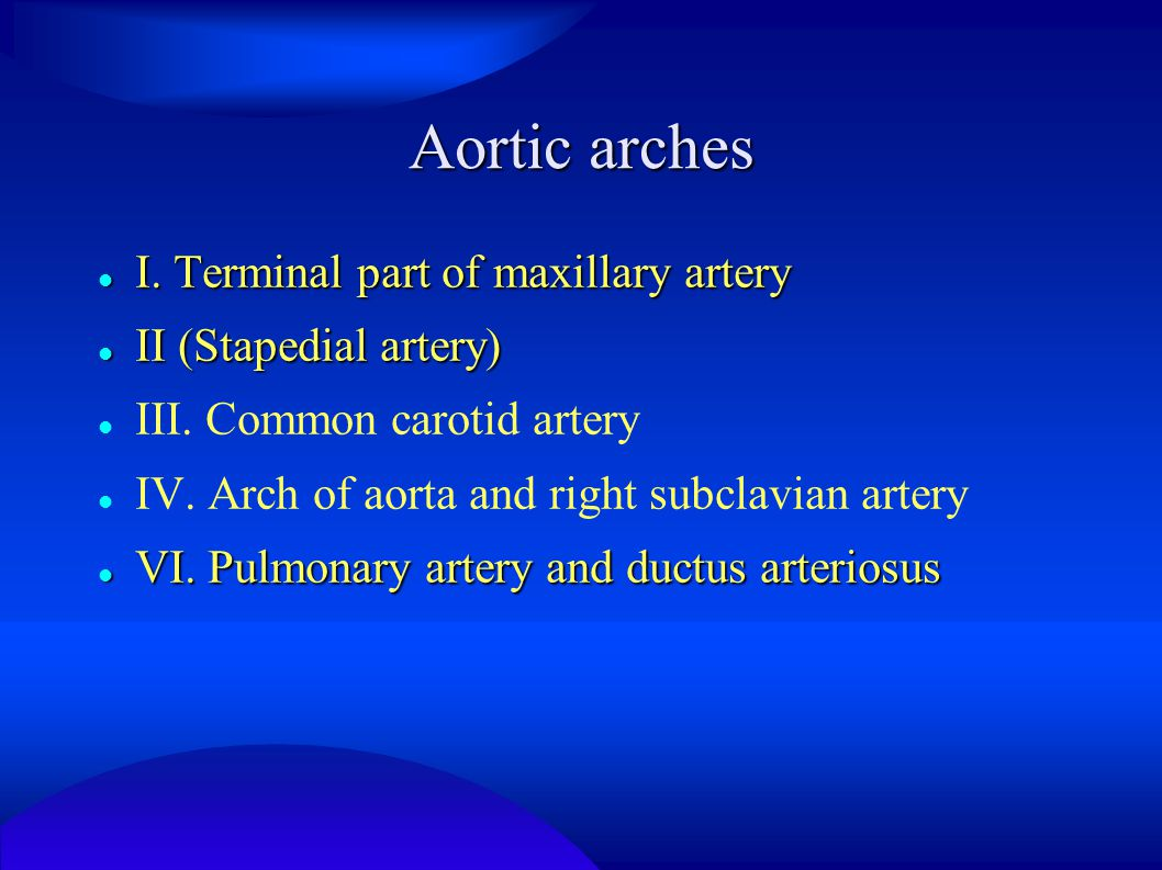 Aortic arches I. Terminal part of maxillary artery