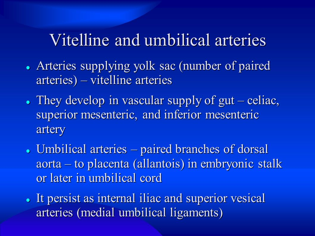 Vitelline and umbilical arteries