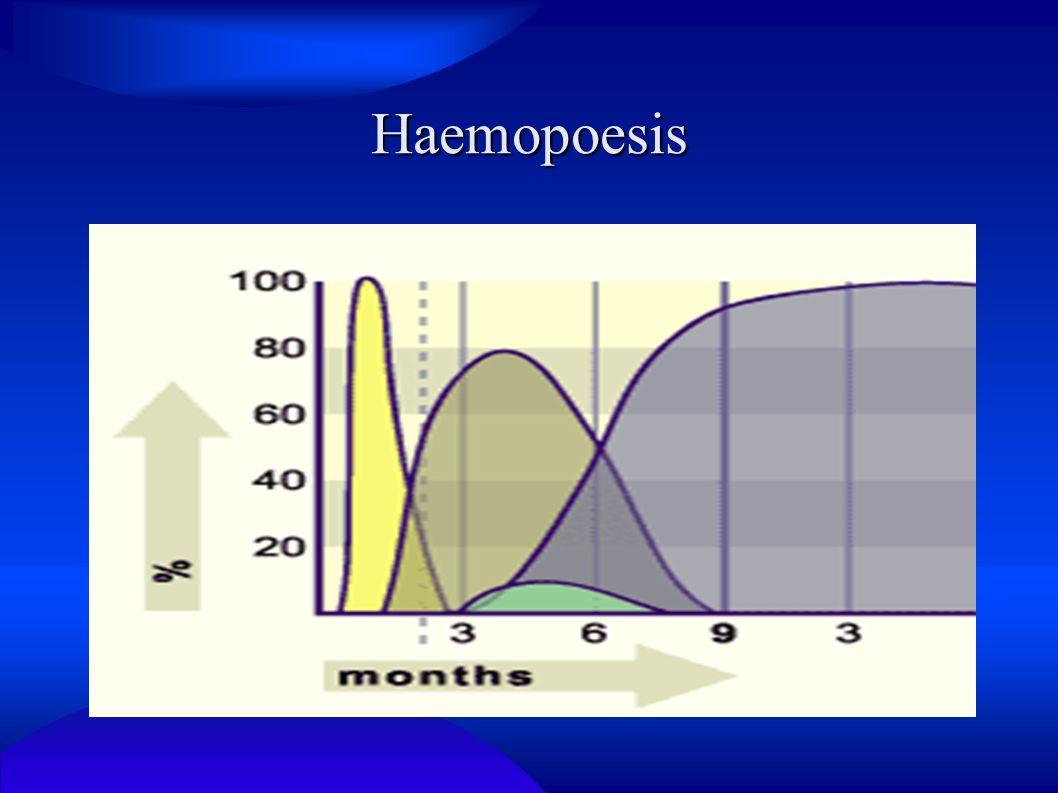 Haemopoesis