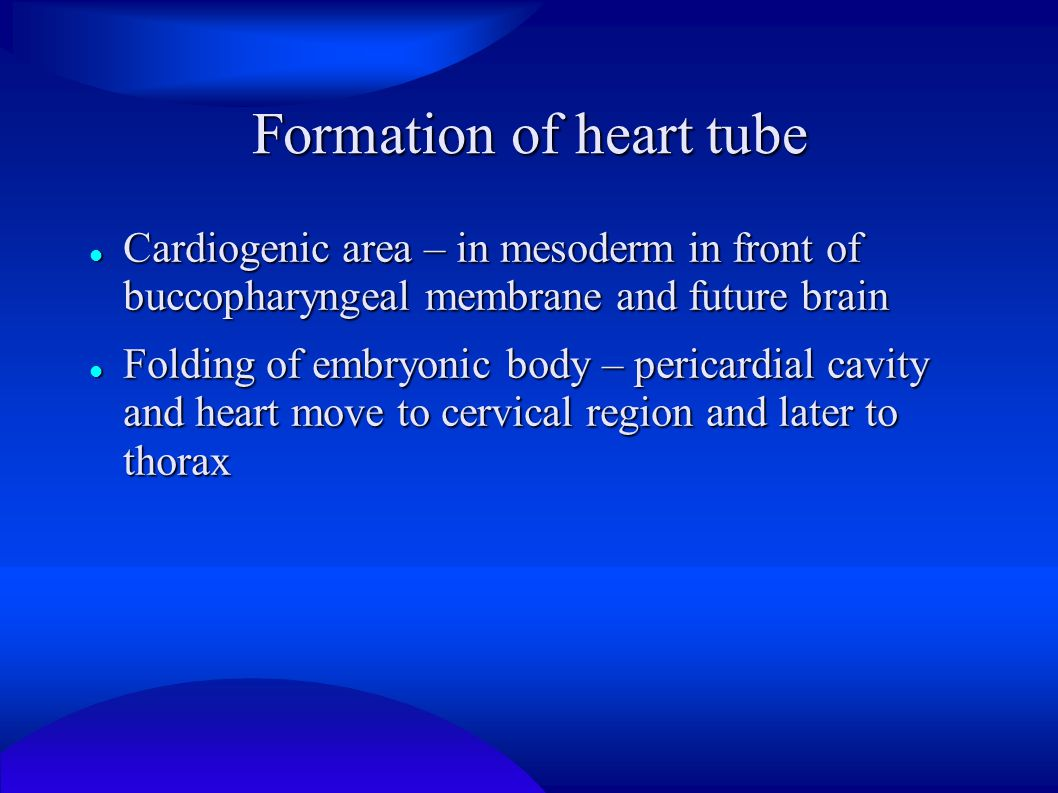 Formation of heart tube