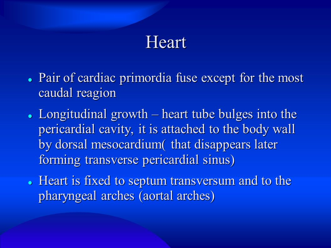Heart Pair of cardiac primordia fuse except for the most caudal reagion.