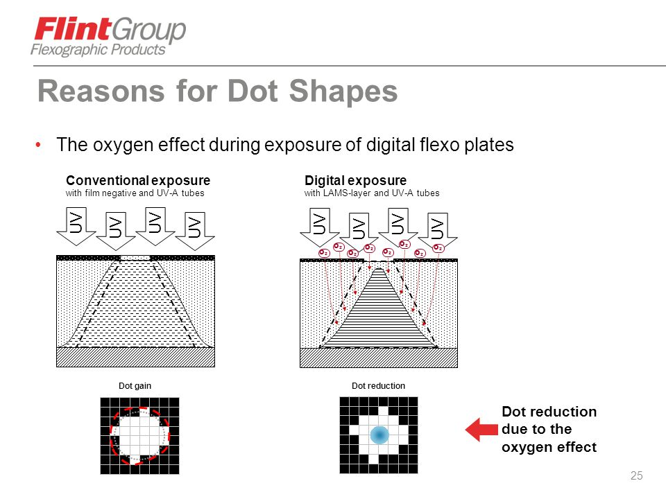 Reasons for Dot Shapes The oxygen effect during exposure of digital flexo plates. Conventional exposure.