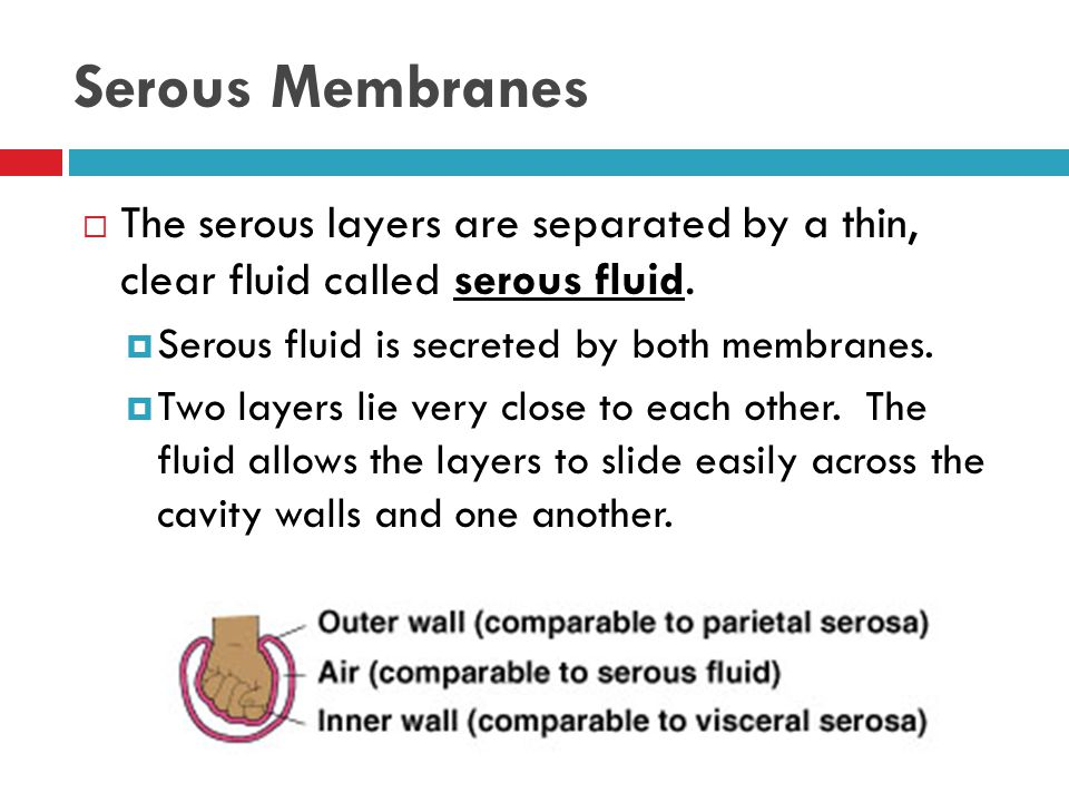 Serous Membranes The serous layers are separated by a thin, clear fluid called serous fluid. Serous fluid is secreted by both membranes.