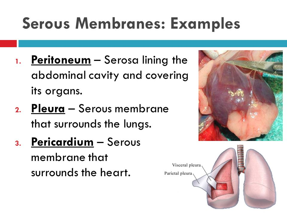 Serous Membranes: Examples