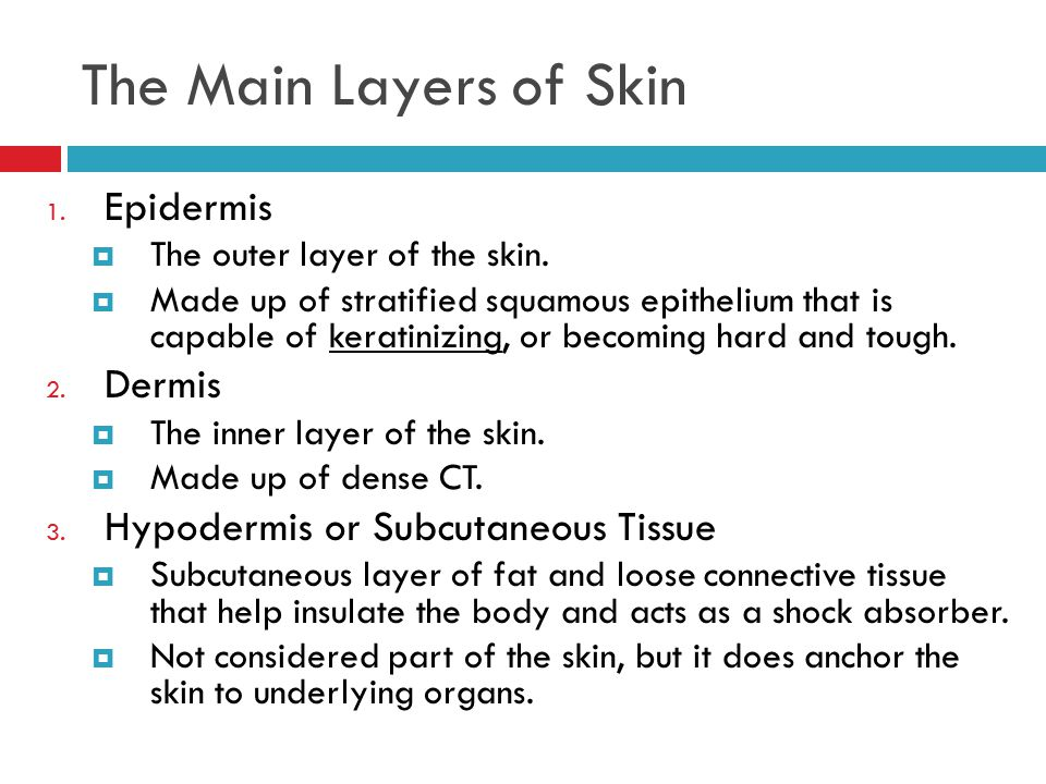 The Main Layers of Skin Epidermis Dermis