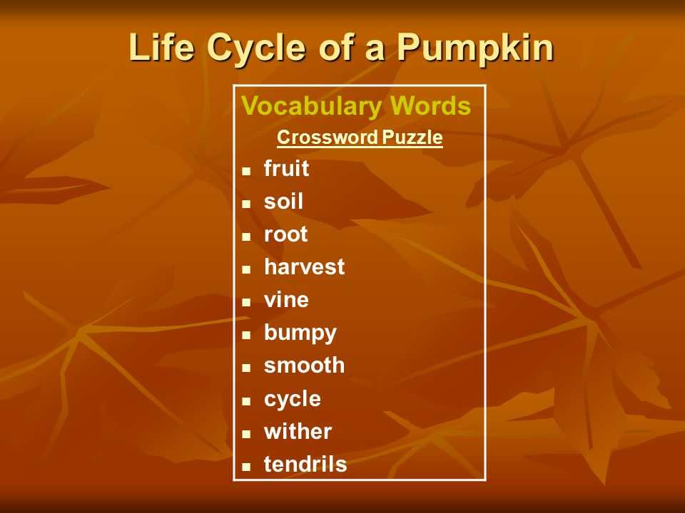Life Cycle of a Pumpkin Vocabulary Words fruit soil root harvest vine