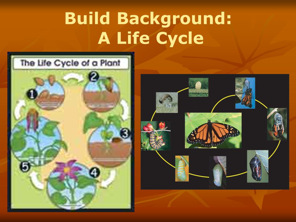 Build Background: A Life Cycle