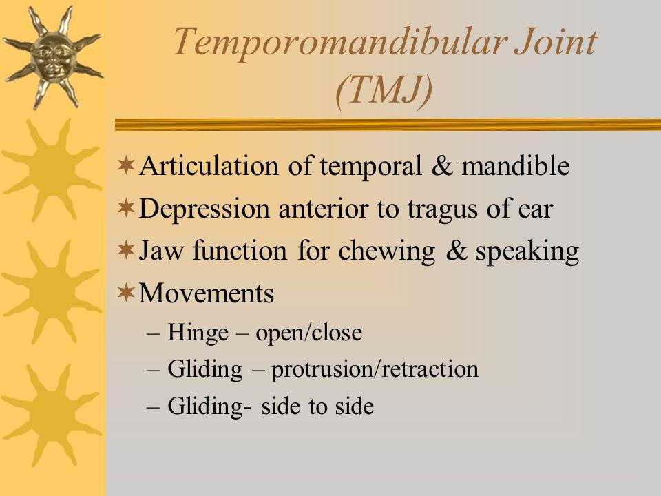 Temporomandibular Joint (TMJ)