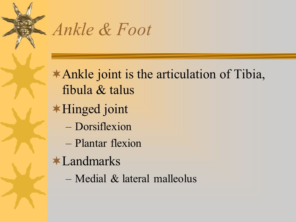 Ankle & Foot Ankle joint is the articulation of Tibia, fibula & talus