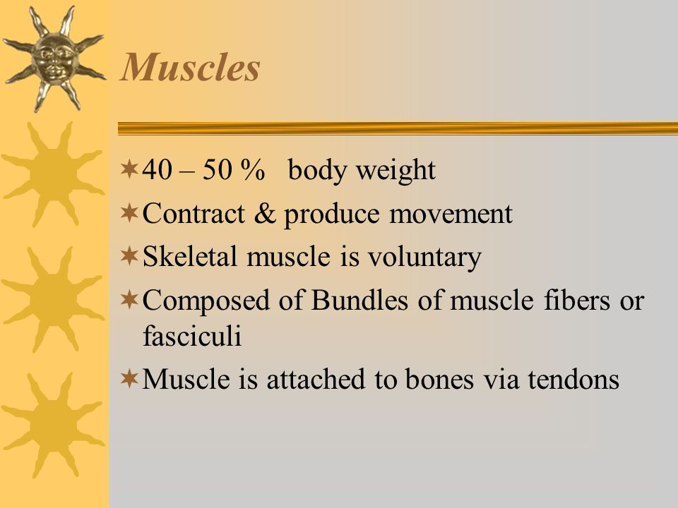 Muscles 40 – 50 % body weight Contract & produce movement
