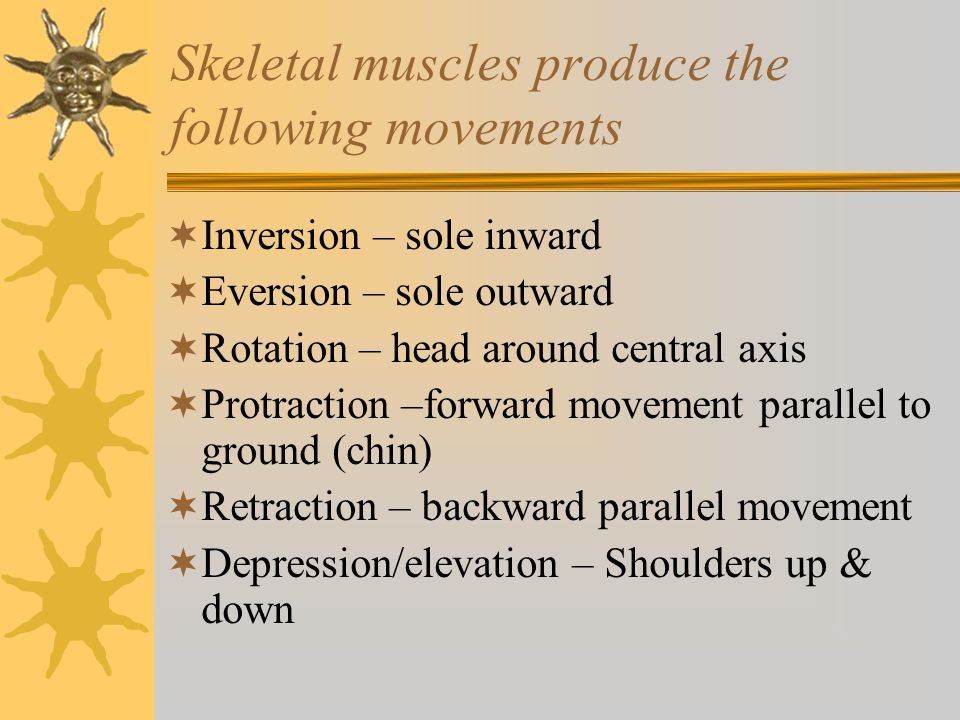 Skeletal muscles produce the following movements