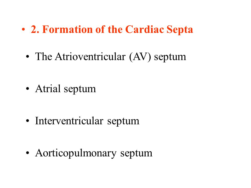 2. Formation of the Cardiac Septa