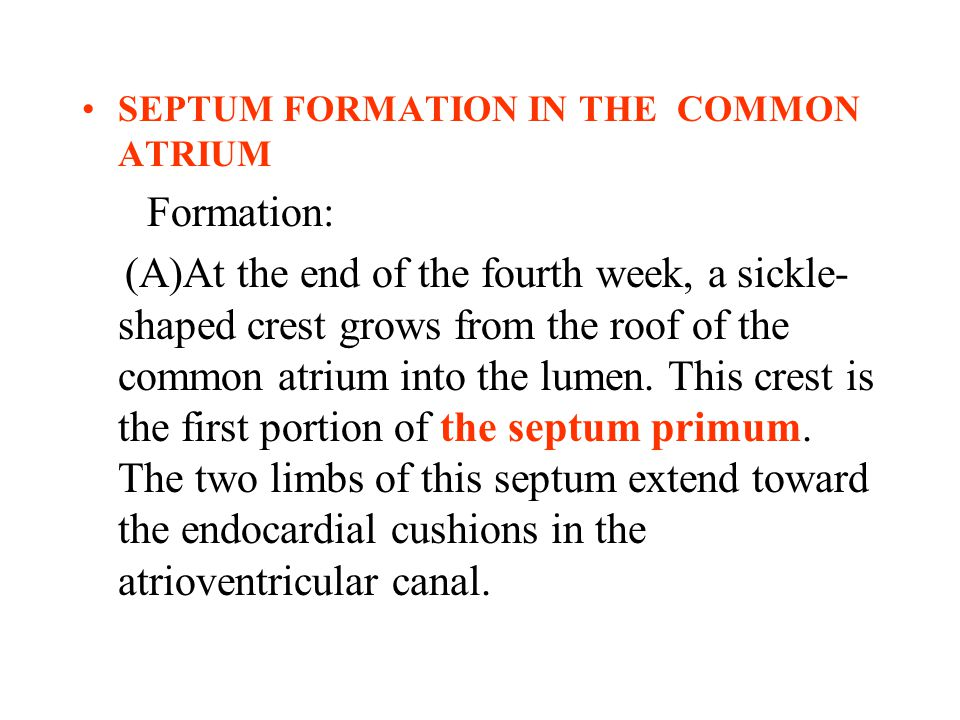 SEPTUM FORMATION IN THE COMMON ATRIUM