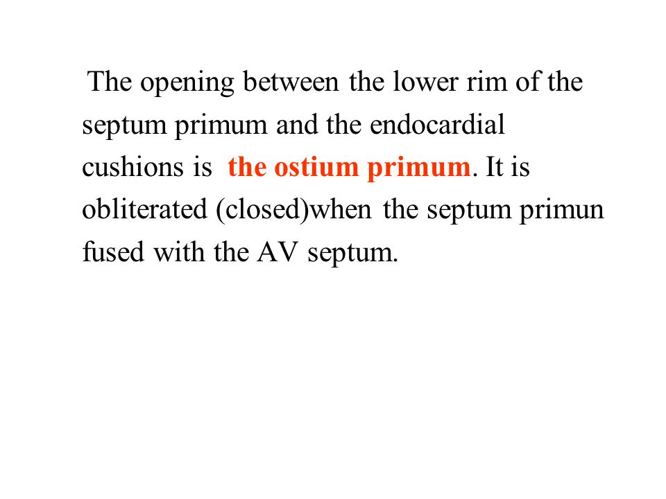 The opening between the lower rim of the septum primum and the endocardial cushions is the ostium primum.
