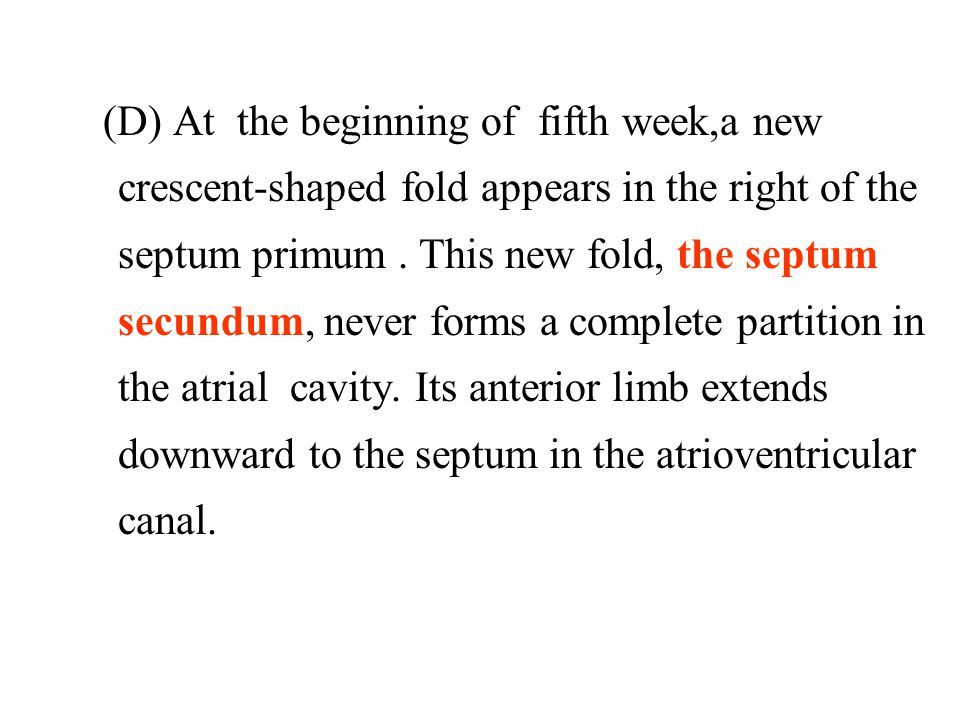 (D) At the beginning of fifth week,a new crescent-shaped fold appears in the right of the septum primum .