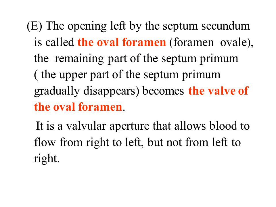 (E) The opening left by the septum secundum is called the oval foramen (foramen ovale), the remaining part of the septum primum ( the upper part of the septum primum gradually disappears) becomes the valve of the oval foramen.