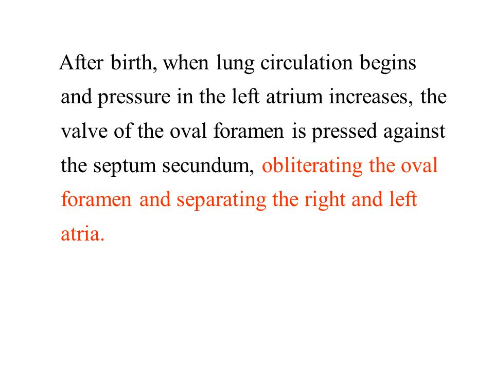 After birth, when lung circulation begins and pressure in the left atrium increases, the valve of the oval foramen is pressed against the septum secundum, obliterating the oval foramen and separating the right and left atria.
