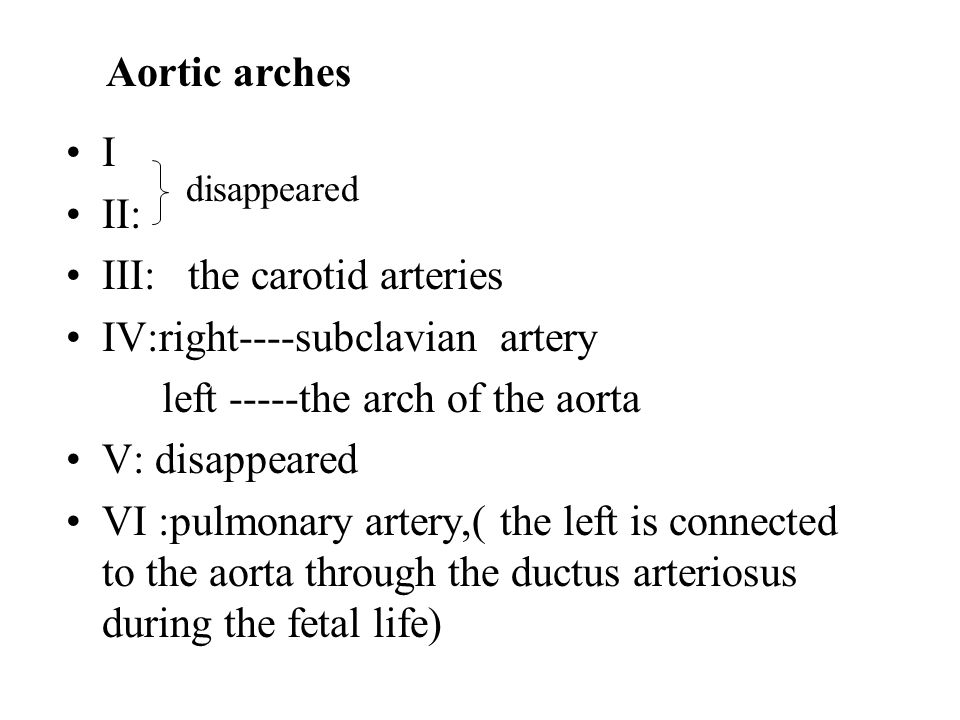 III: the carotid arteries IV:right----subclavian artery