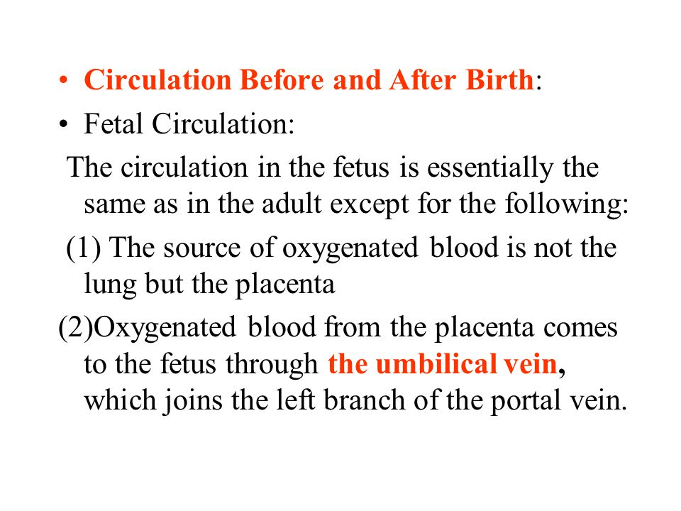 Circulation Before and After Birth: