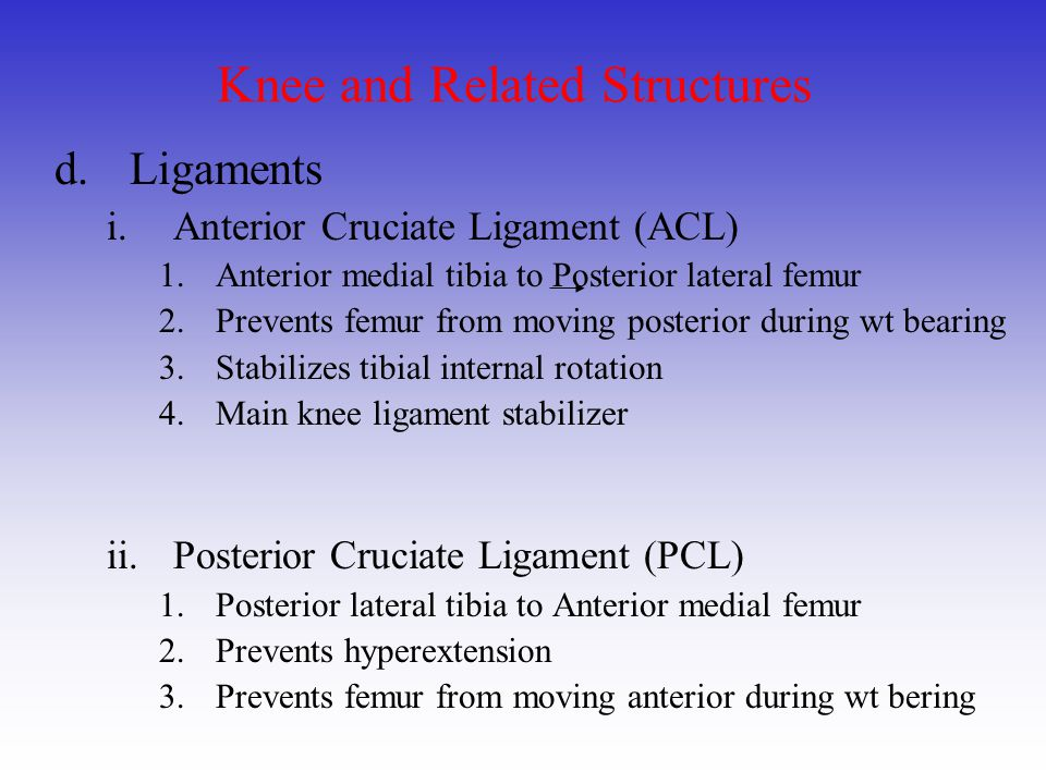 Knee and Related Structures