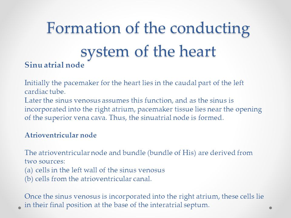 Formation of the conducting system of the heart