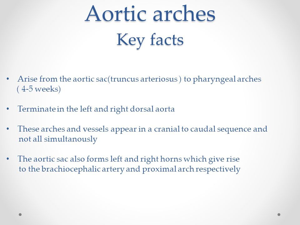Aortic arches Key facts