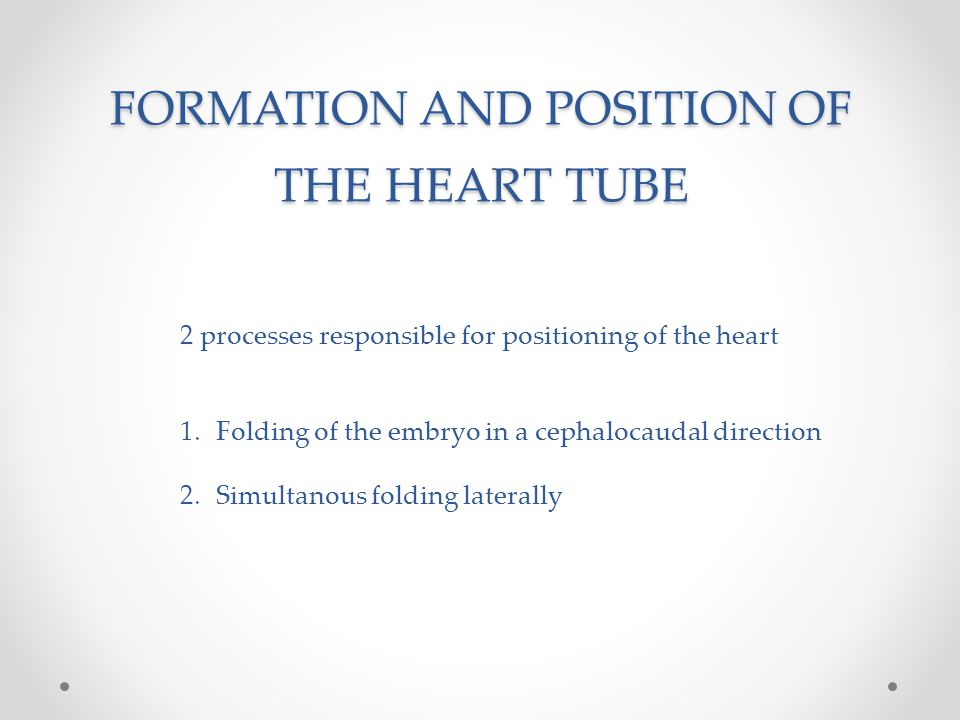 FORMATION AND POSITION OF THE HEART TUBE