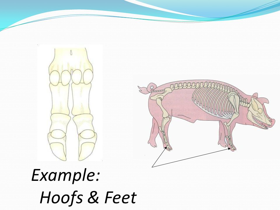 Example: Hoofs & Feet
