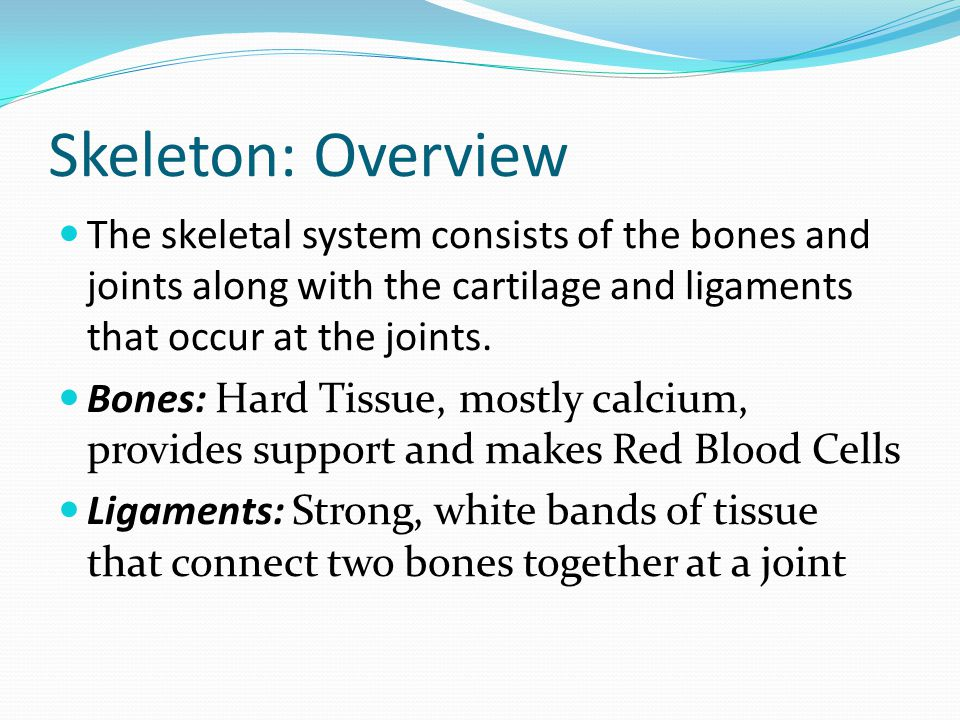 Skeleton: Overview The skeletal system consists of the bones and joints along with the cartilage and ligaments that occur at the joints.