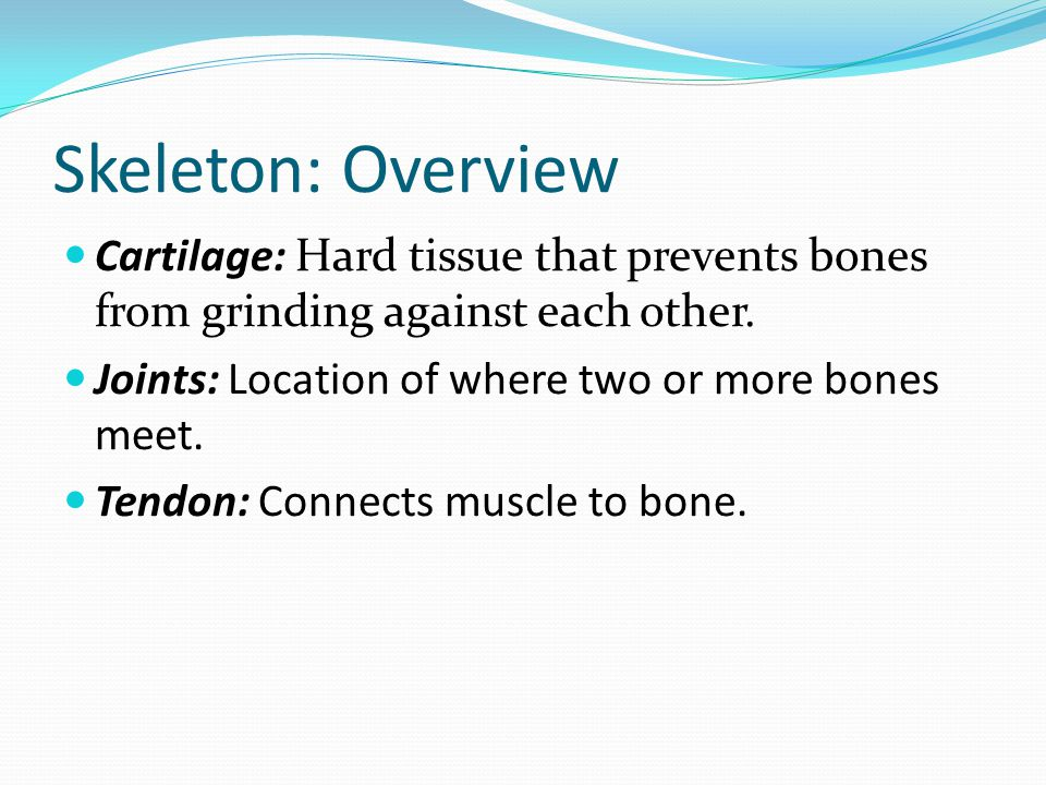 Skeleton: Overview Cartilage: Hard tissue that prevents bones from grinding against each other. Joints: Location of where two or more bones meet.