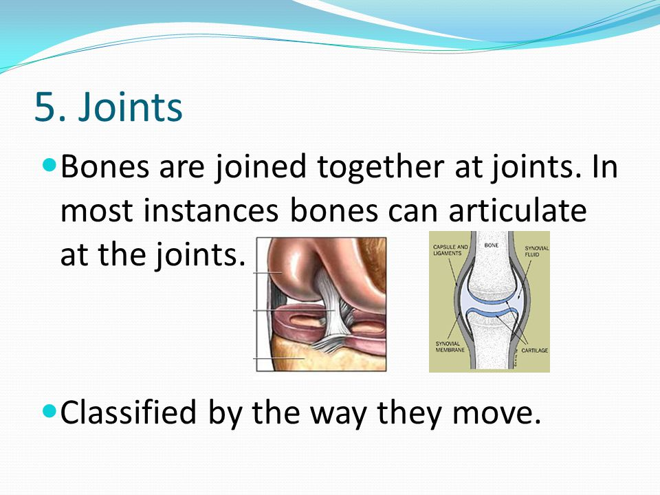 5. Joints Bones are joined together at joints. In most instances bones can articulate at the joints.