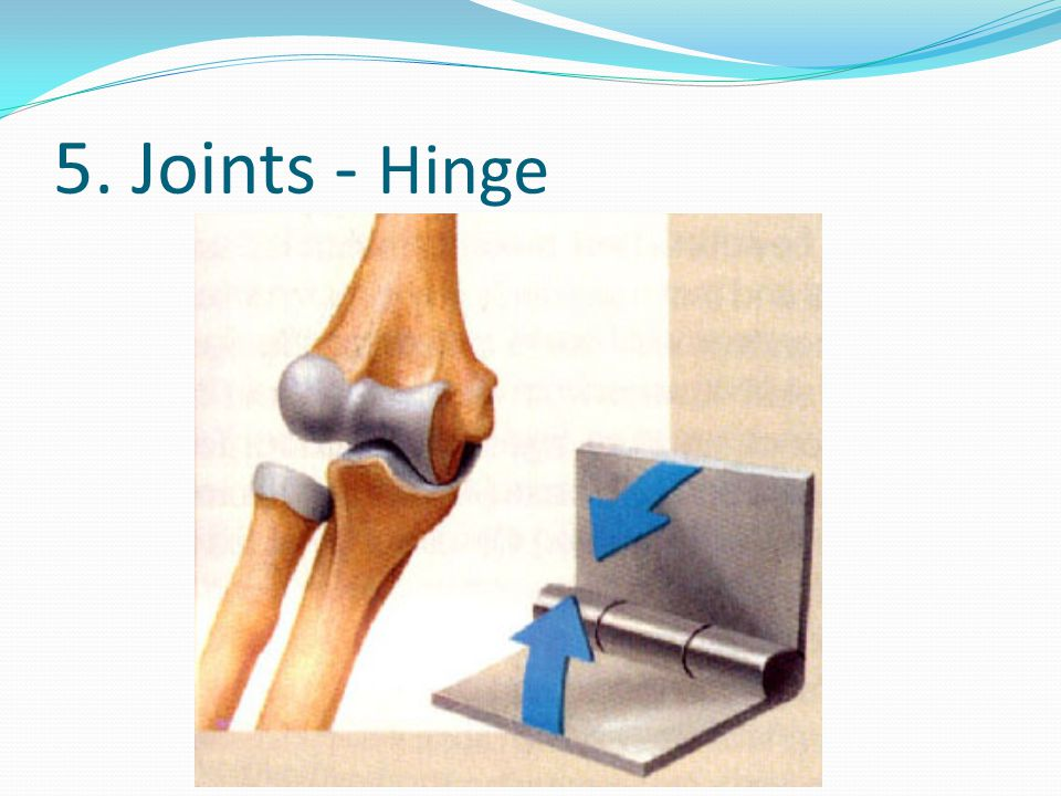 5. Joints - Hinge