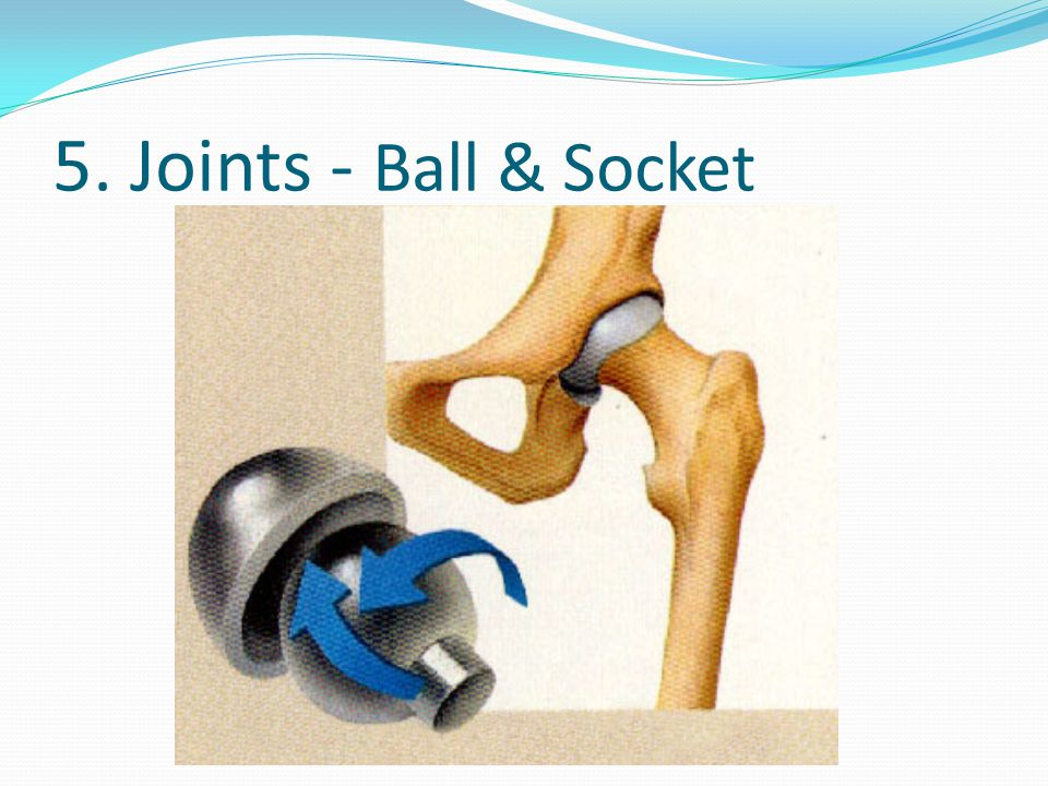5. Joints - Ball & Socket