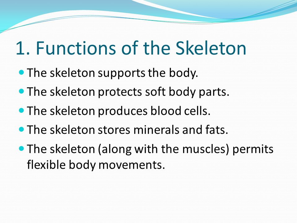 1. Functions of the Skeleton
