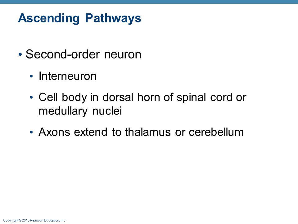 Ascending Pathways Second-order neuron Interneuron