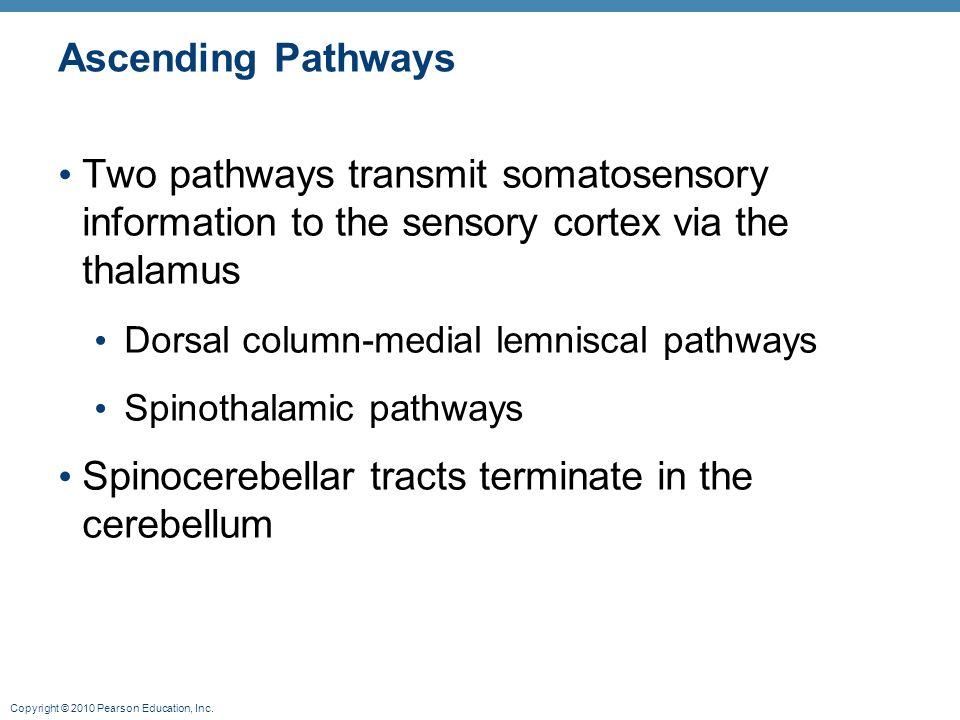 Spinocerebellar tracts terminate in the cerebellum