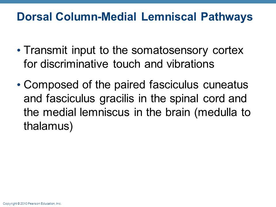 Dorsal Column-Medial Lemniscal Pathways