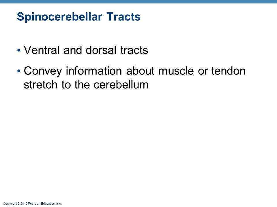 Spinocerebellar Tracts