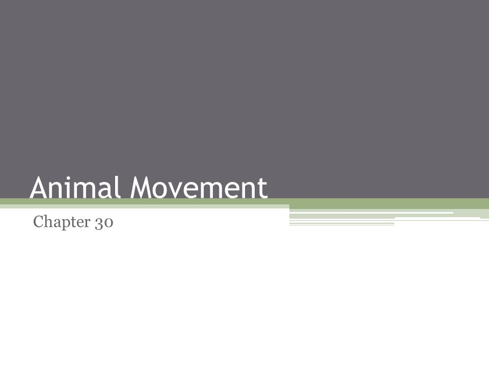 Animal Movement Chapter 30